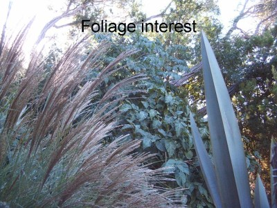 Miscanthus, flax and tamarillo together